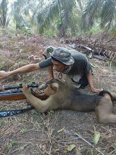Viral Foto Beruk Diajarin Menembak Oleh Manusia
