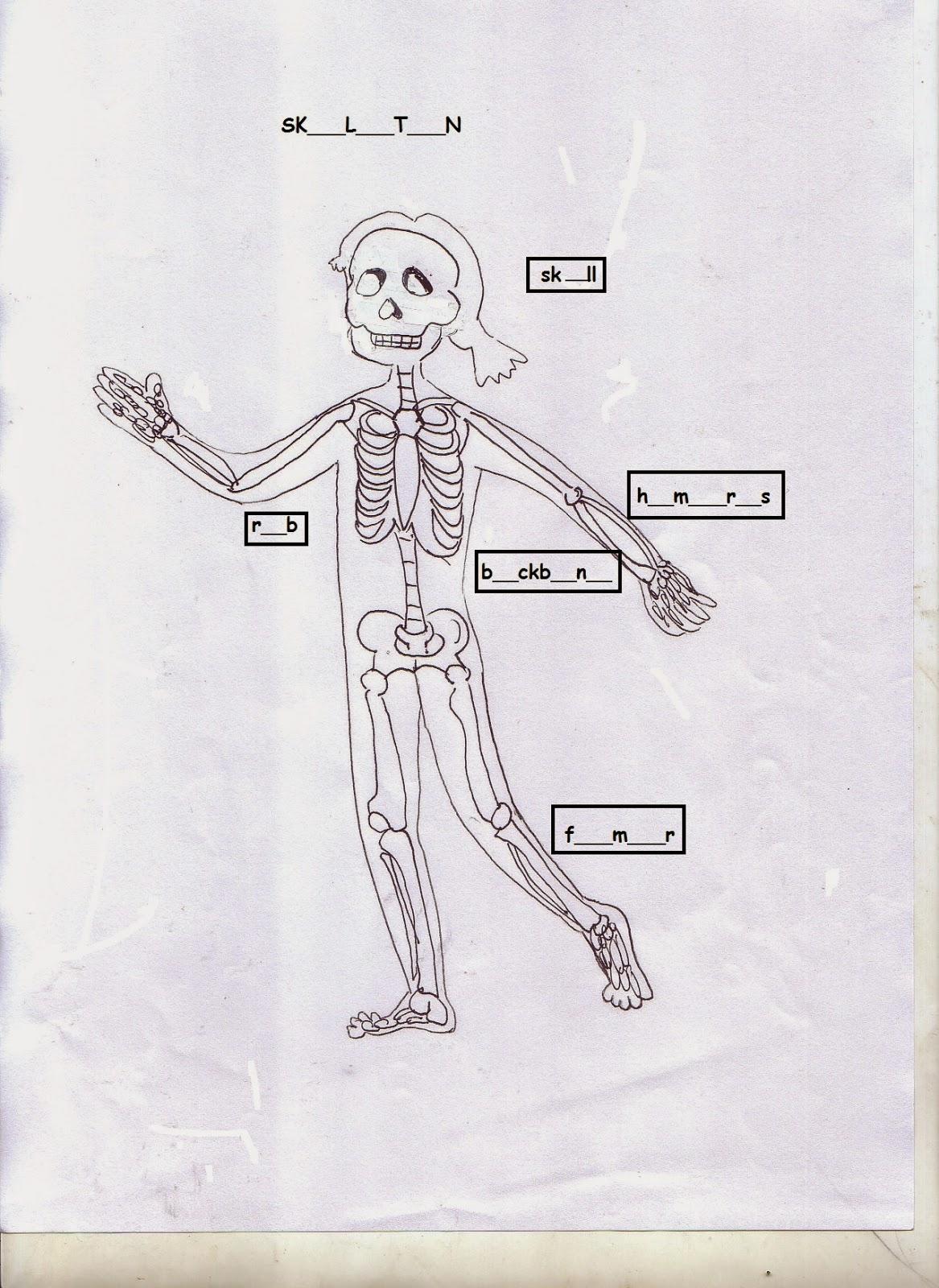 Clil Art Amp Science Body Worksheet