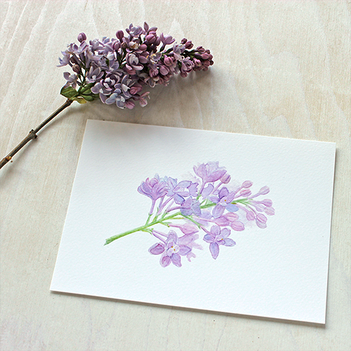 Watercolor botanical illustration of lilac