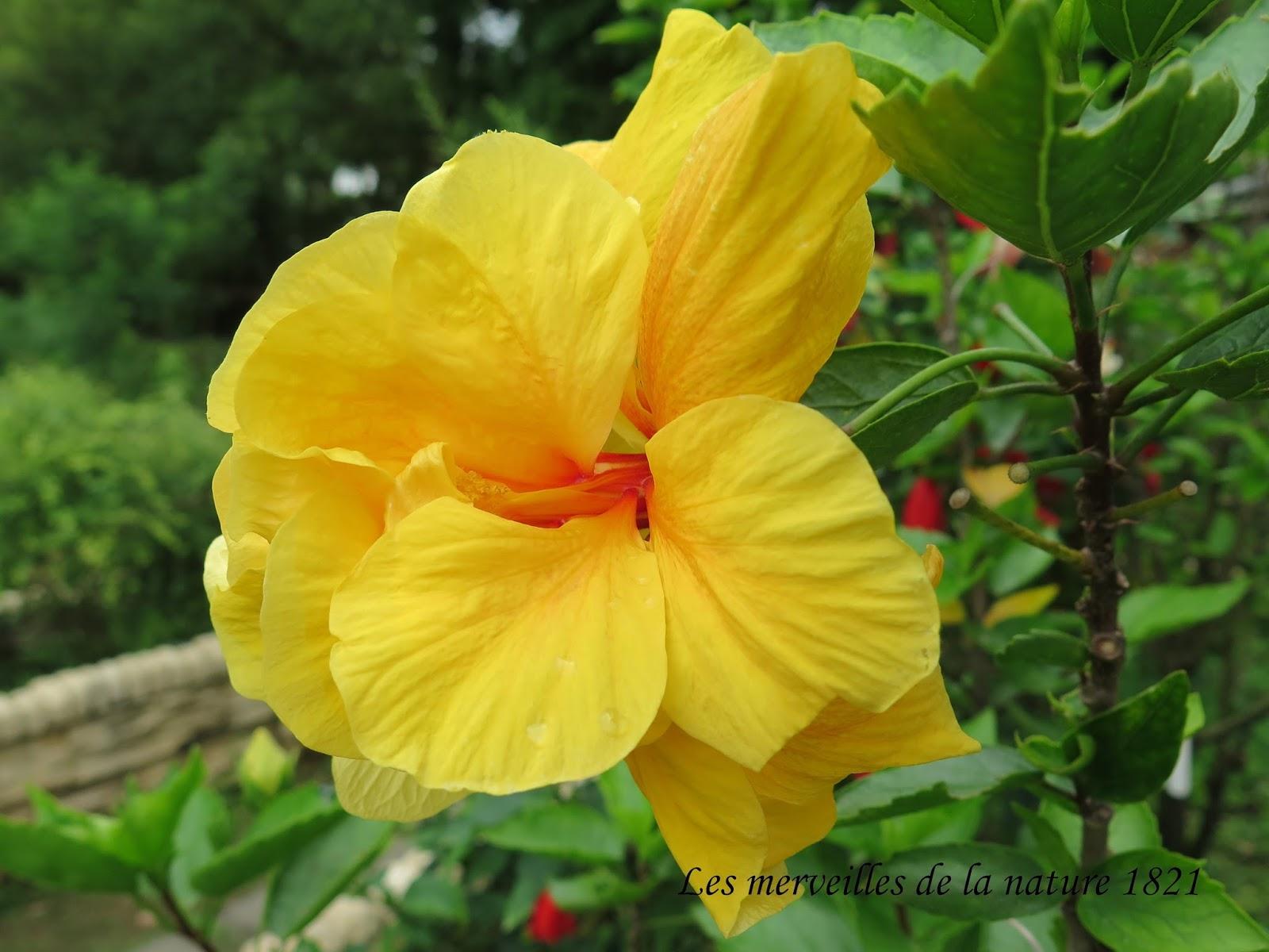 Les merveilles de la nature: Le Jardin botanique de Taipei (1)