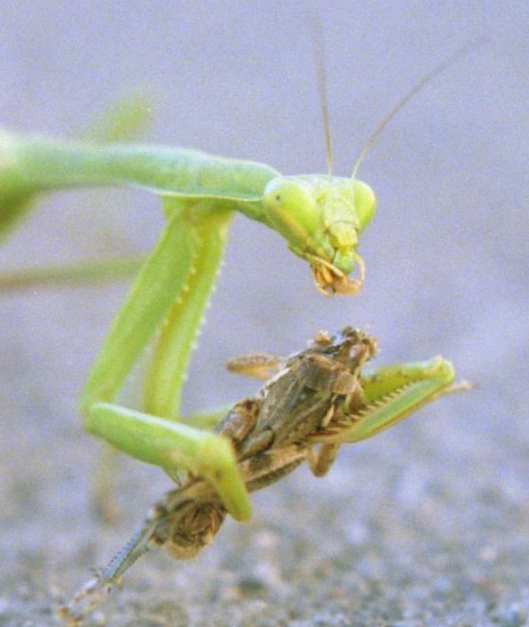 symbiotic relationship between ladybugs and plants