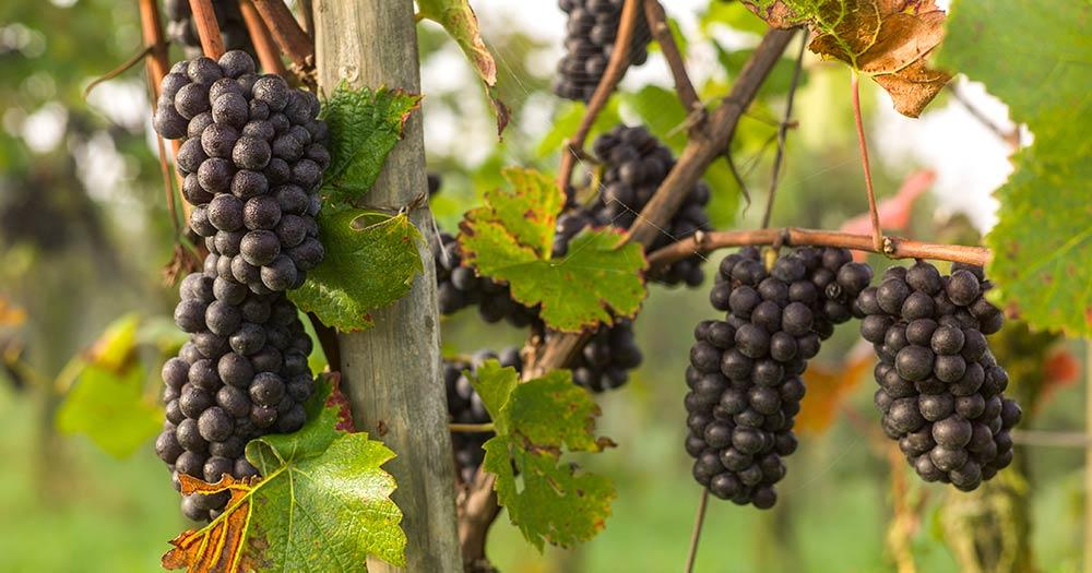 25 Jahre Biovalais: «Das Wallis ist ideal für die biologische Landwirtschaft»