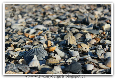 Shells on a beach