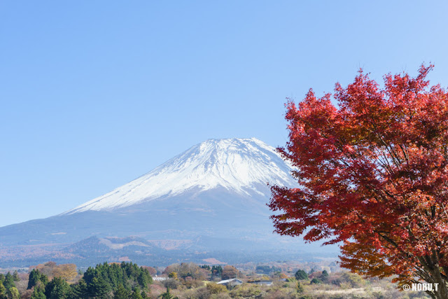 紅葉と富士山~富士ヶ嶺