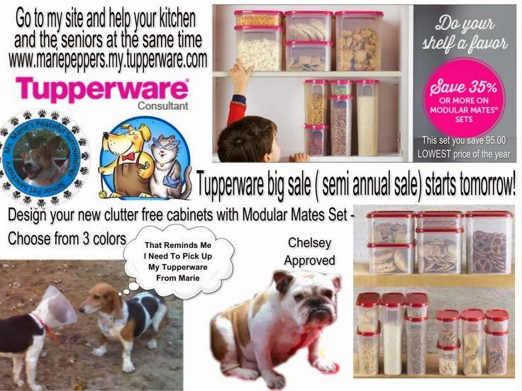Tupperware For English Bulldog Rescue