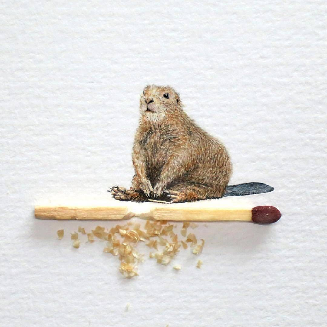 03-Beaver-Frank Holzenburg Miniature Drawings and Paintings of Animals-www-designstack-co