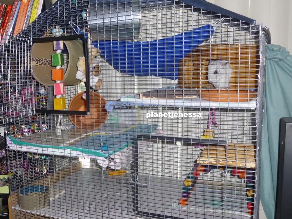 chinchilla cage - photo #41