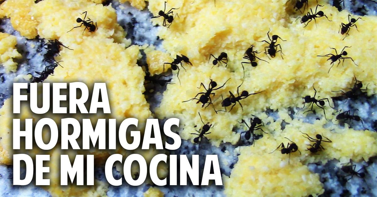 Como eliminar hormigas de la cocina aniquilamiento - Como acabar con las hormigas en el jardin ...
