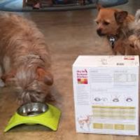 The Honest Kitchen Marvel dog food review