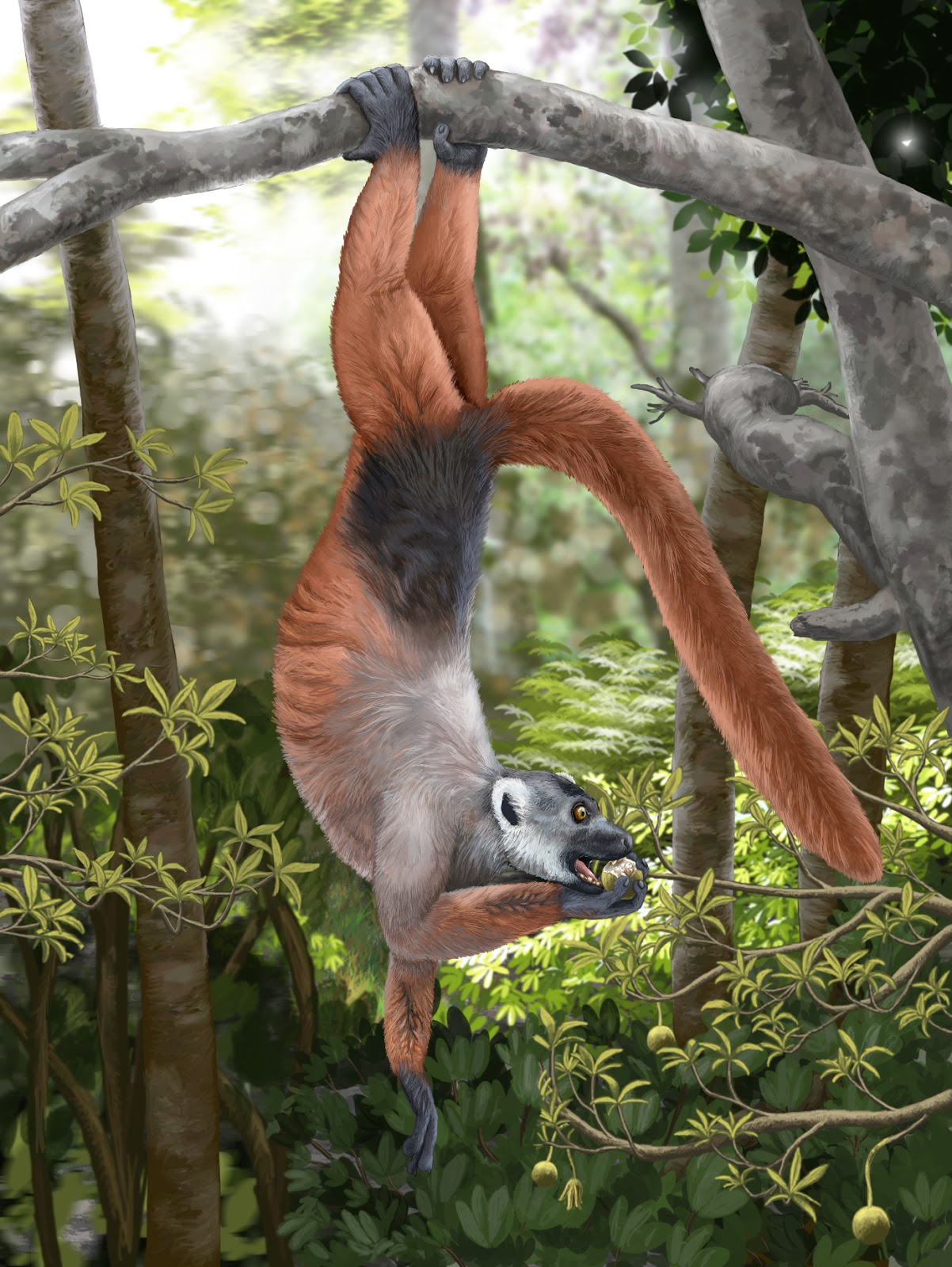 Abe's Animals: Sizes of the giant extinct Malagasy animals
