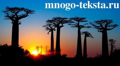 Уникальный Мадагаскар, кем и когда был открыт остров Мадагаскар, Лемуры