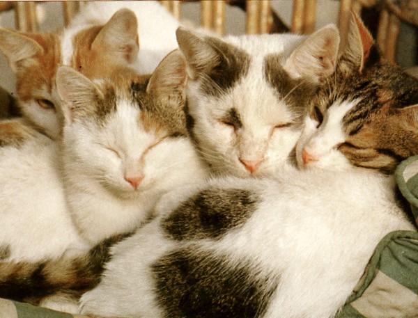 kittens egypt