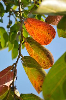 red orange leaves under blue sky