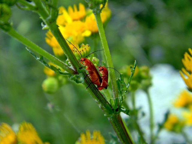 owady, kwiat, roślina, żółty