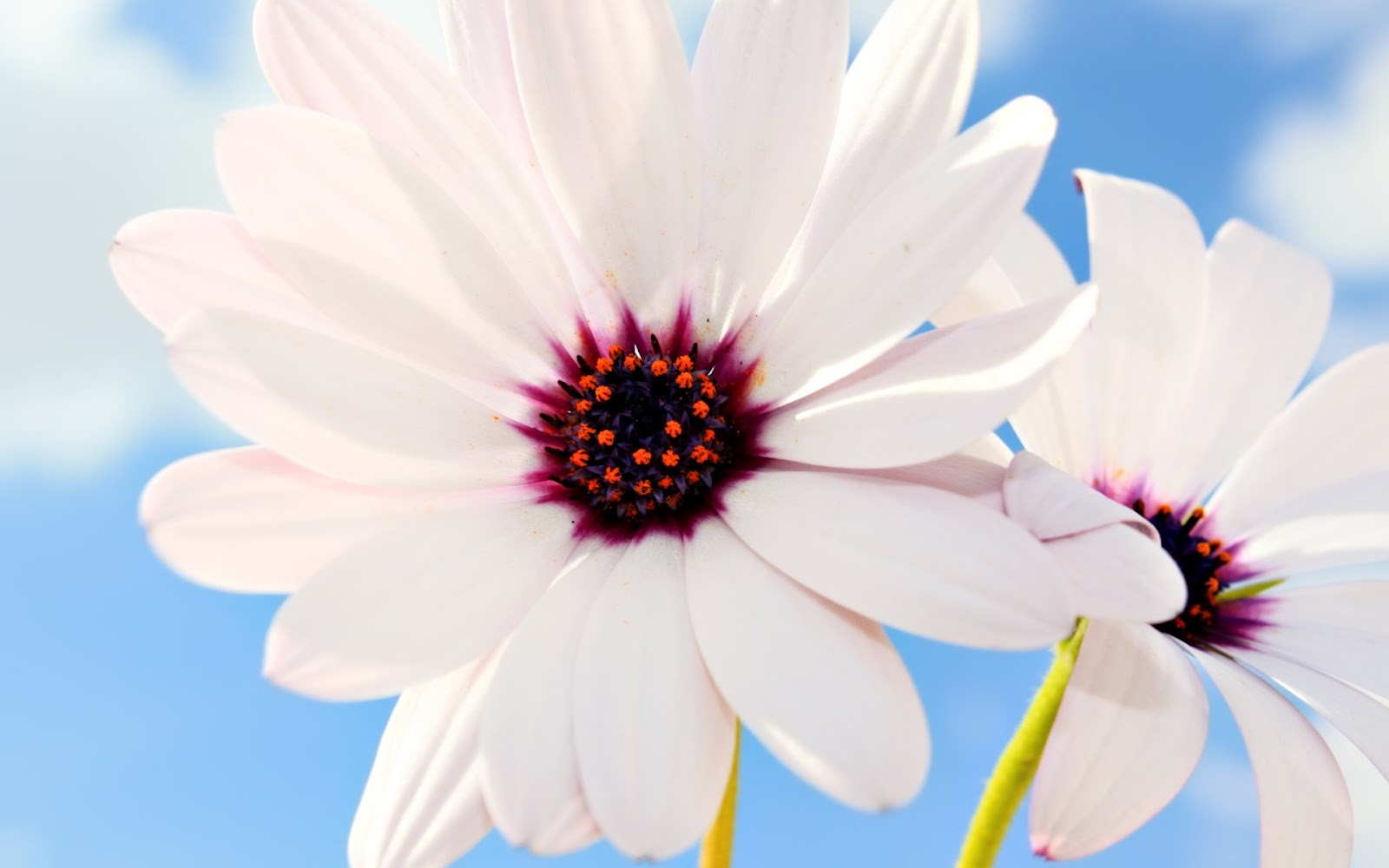 flowers for flower lovers.: Flowers wallpapers HD.