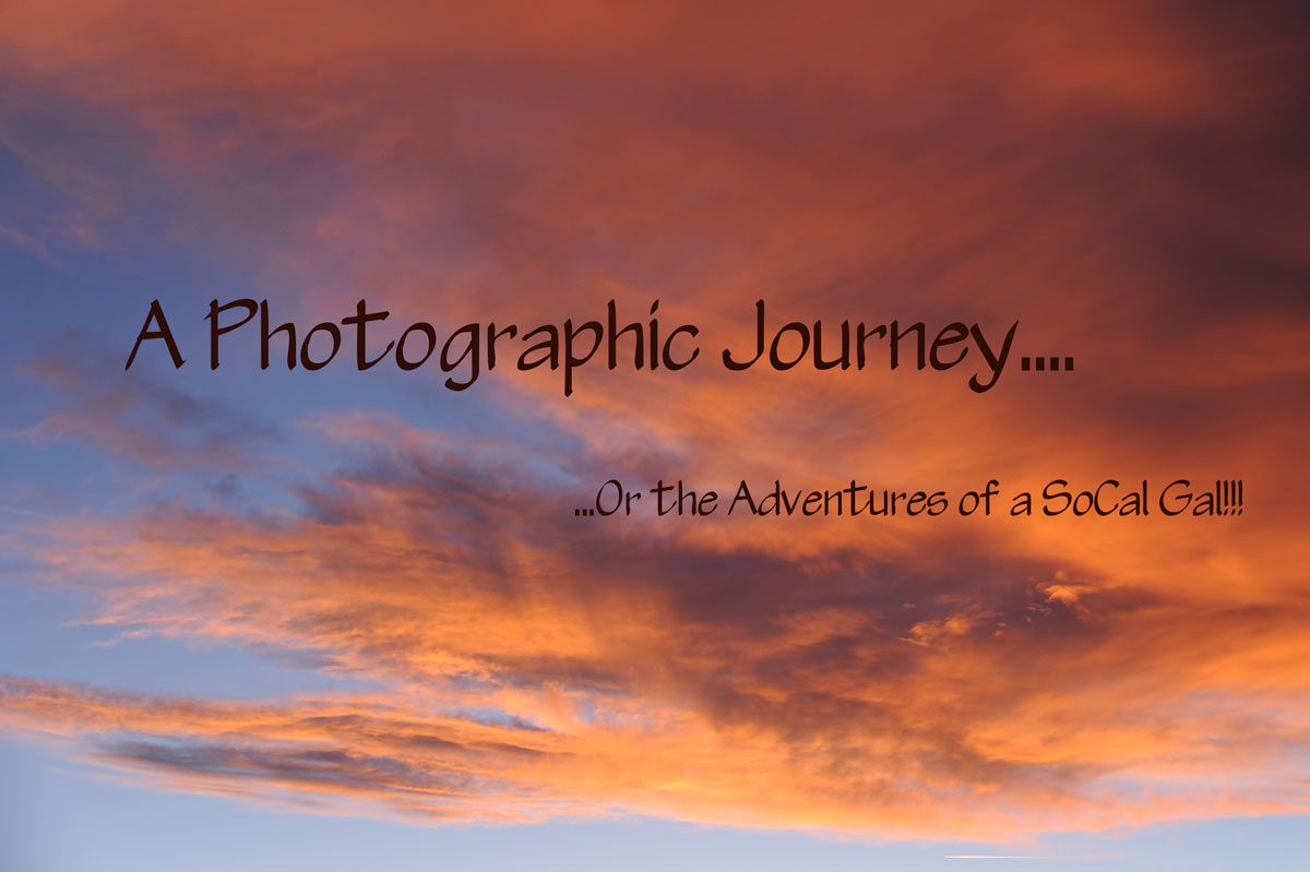 A Photographic Journey...