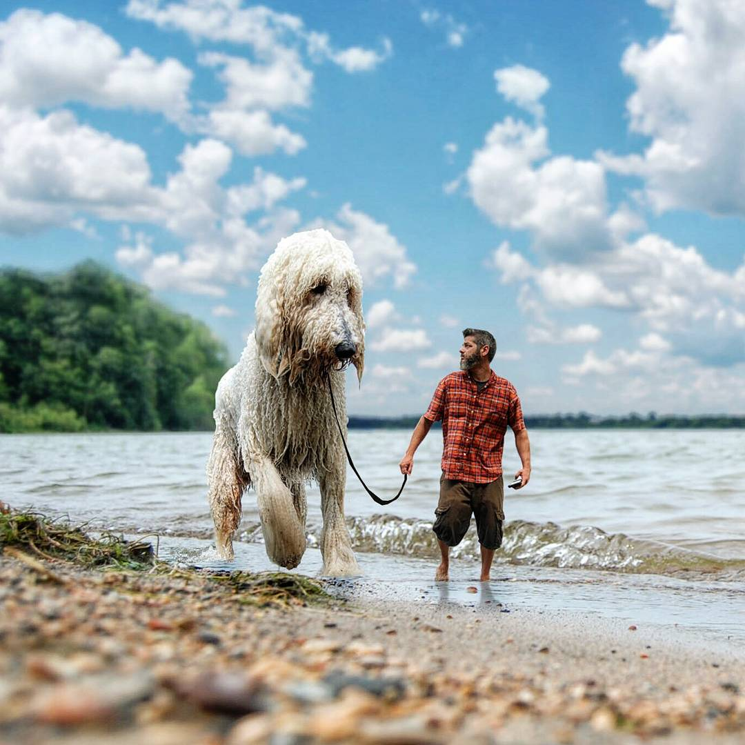 14-Walk-on-the-Beach-Christopher-Cline-Juji-The-Giant-Dog-Photo-Manipulations-www-designstack-co