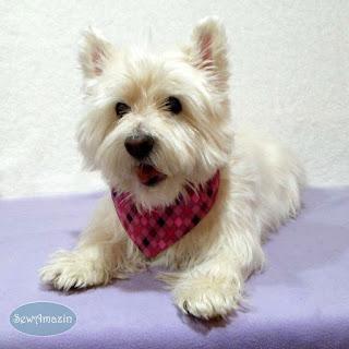 Classy Canine Argyle Dog Bandana, Pink