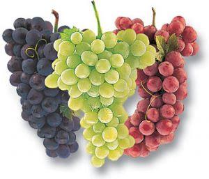 buah anggur yang bagus