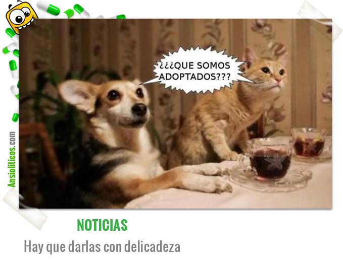 Chiste de Animales: Adopción de Mascotas