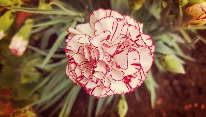 Flores de jardines