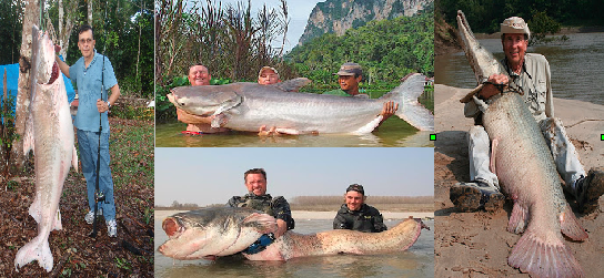 Mondo pesca news gennaio 2013 for Pesci acqua dolce fredda laghetto