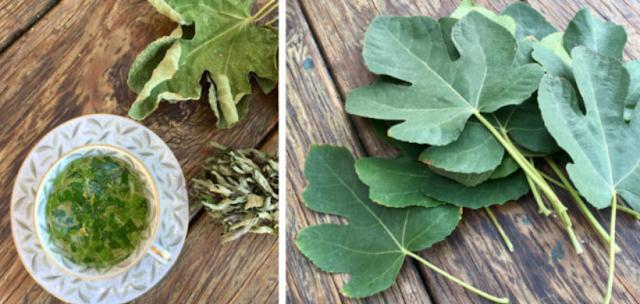 Φύλλα Συκιάς – Οι Θαυμαστές Θεραπευτικές τους Ιδιότητές