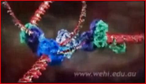 DNA Replication animatedfilmreviews.filminspector.com