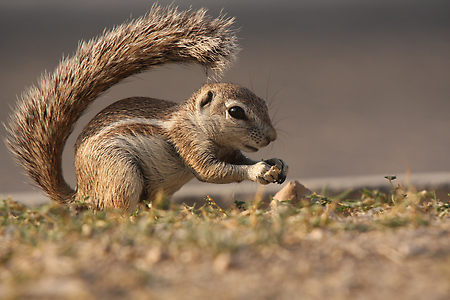 The News For Squirrels: The Amazing Spectacular Squirrel Tail