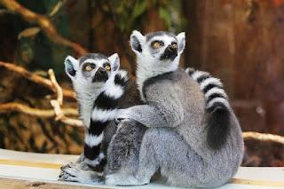 Jenis Fauna Asiatis, Peralihan dan Fauna Tipe Australia