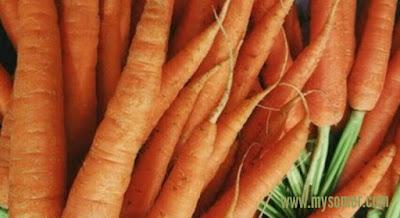 manfaaat wortel untuk lovebird
