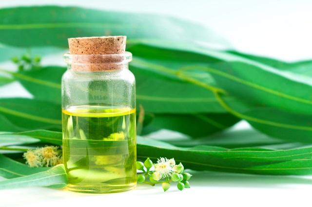Aromatherapy Oil - Eucalyptus Essential Oil