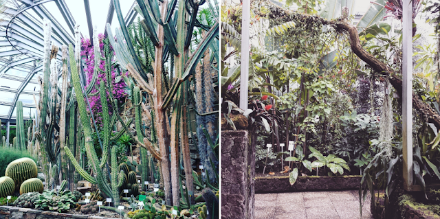 Get lost in Botanical garden in Berlin / Botanischer Garten