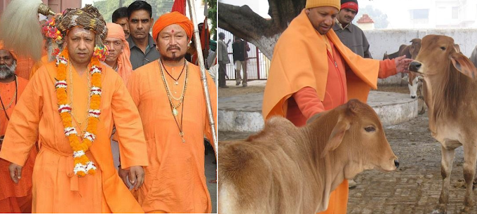 UP State Yogi's Govt Protecting Cows Goes Hi-Tech to Solve Problem of Stray Cattle