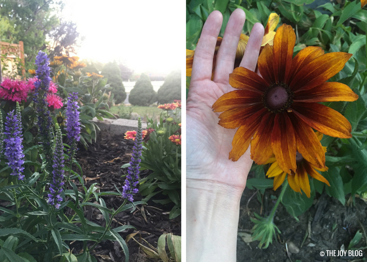 Veronica Dark Blue Moody Blues and Rudbeckia Autumn Colors / A New Perennial Flower Bed // www.thejoyblog.net