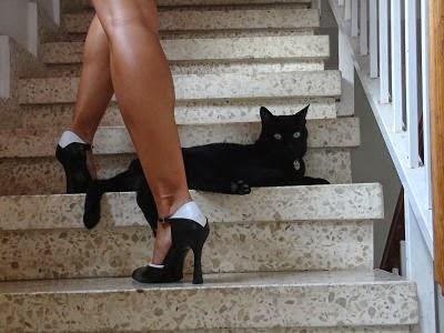 Relato de gatos