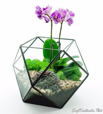 en güzel terraryum fikirleri