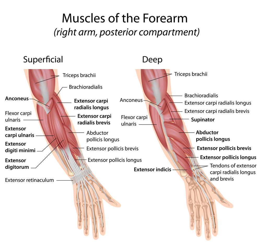 Tennis elbow pain exercise and treatment ~ akufisio.blogspot