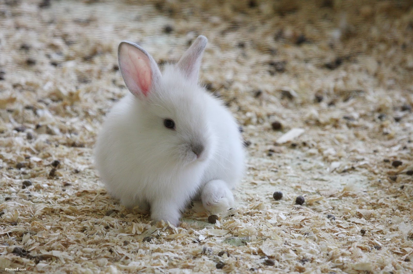 Cute White Baby Rabbits Wallpapers Unique Wallpaper Bunny