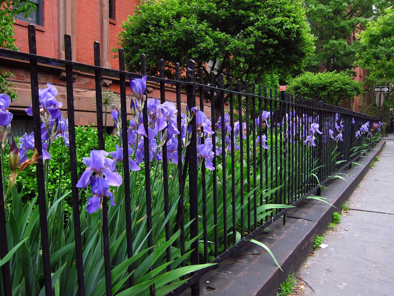 66 square feet plus the iris garden for Irish garden designs