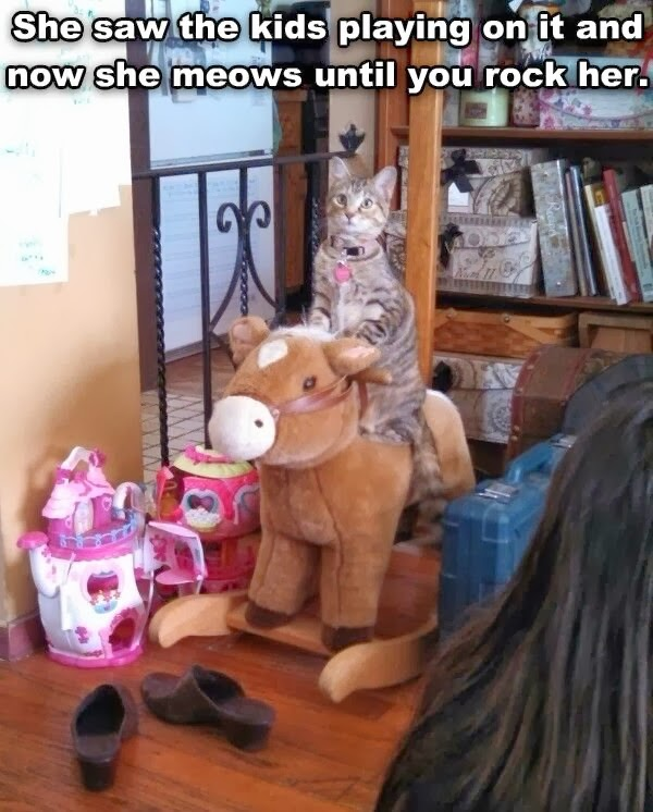 Funny cats - part 93 (40 pics + 10 gifs), cat sits on rocking horse