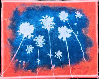 Wet cyanotype_Sue Reno_Image 474