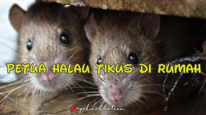 5 Petua Yang Biasa Digunakan Untuk Halau Tikus Di Rumah