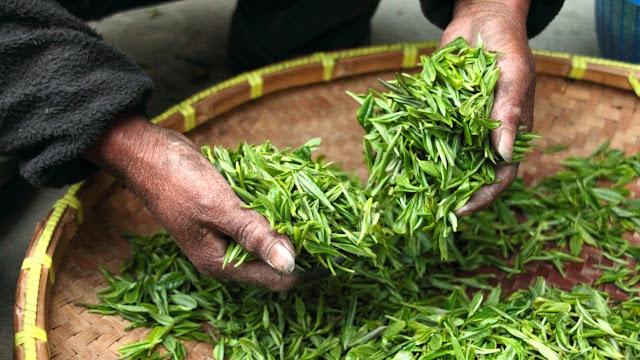 Darjeeling Tea Price Online