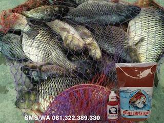 Paket Umpan Khusus Ikan Mas Subang