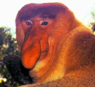 Необычные приматы, носач