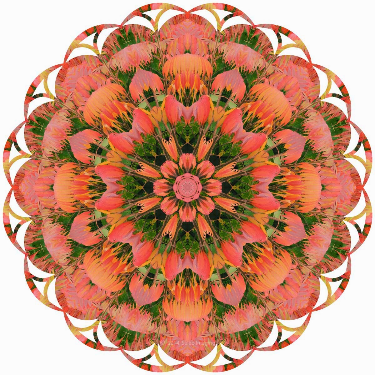 Kaleidoscope Photo Art sumac by Jeanne Selep