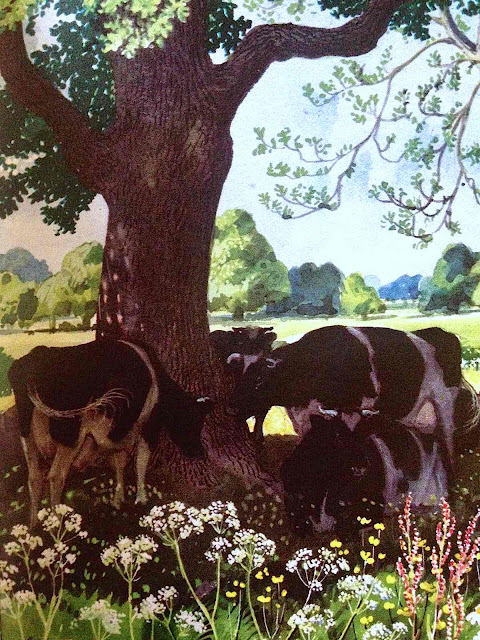 CF Tunnicliffe cows