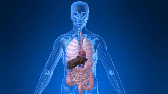 Fungsi dan organ sistem ekskresi di dalam tubuh