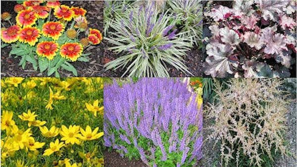 A guide to northeastern gardening best long blooming for Low maintenance perennials zone 4